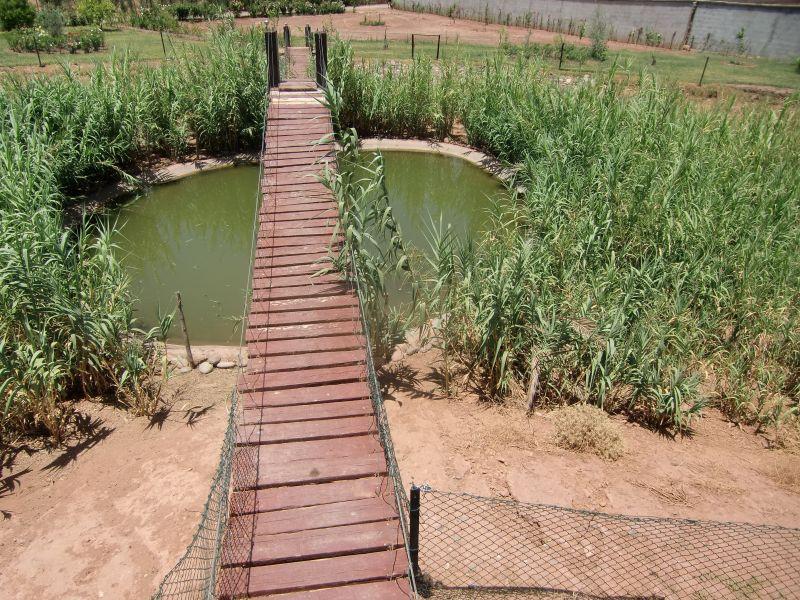 35 Meter langeHängebrücke über den See.